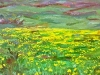 yellow-field-study