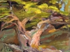 point-lobos-cypress-16-x-12-oil-on-panel
